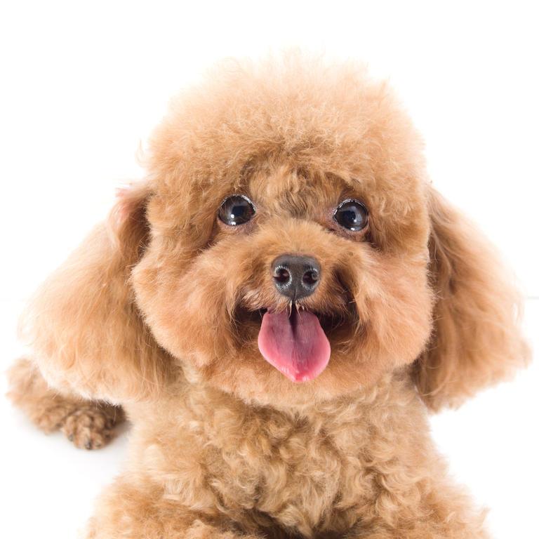 Бесплатные бесплатности для собак