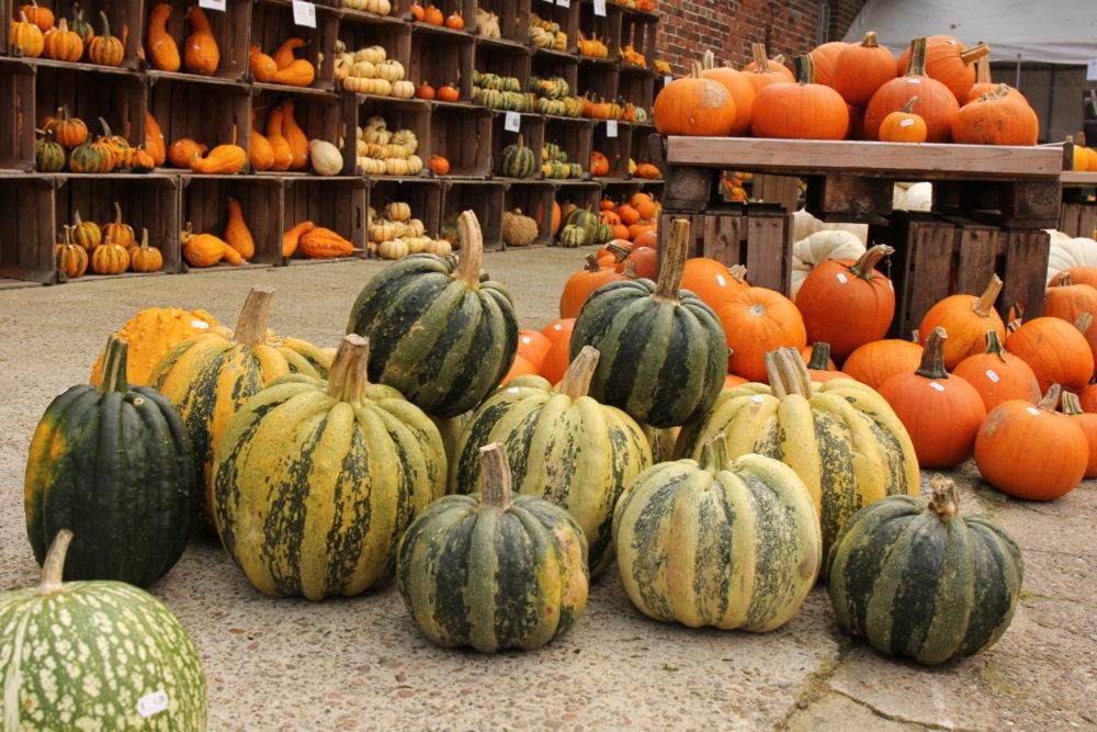 Осень в Германии: тыквы, семейное поместье и свежий хлеб.